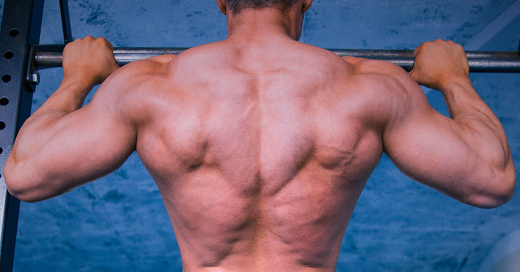 pull up and back muscles